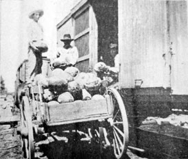 Photo---Lancaster---Loading-Watermelons-of-Marable-Hinely-and-Sid-Hinely-on-Live-Oak,-Perry,-and-Gulf-Railroad---1910