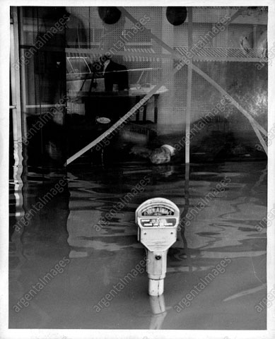 Photo---Live-Oak---Hurricane-Dora---1964