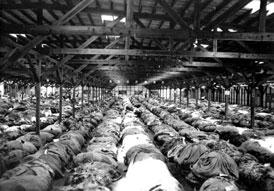 Photo---Live-Oak---Tobacco-Warehouses---1938---February-28