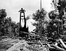 Photo---Near-Live-Oak---Logging-Longleaf-Pines-using-Two-Line-Steam-Skidder---1942