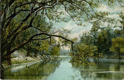 Photo---Suwannee-River---1908