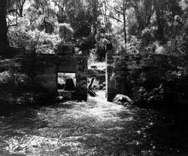 Photo---Suwannee-River---1961---June